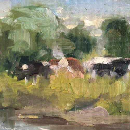 Koeien langs de Aa