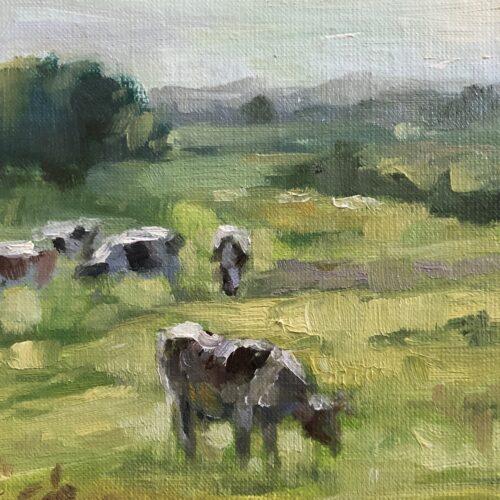 Koeien in Berlicum